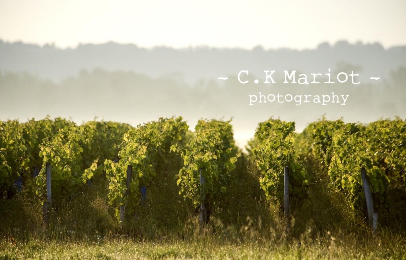CK- Mariot- Photography-Chateau Labegorce- Margaux- 003