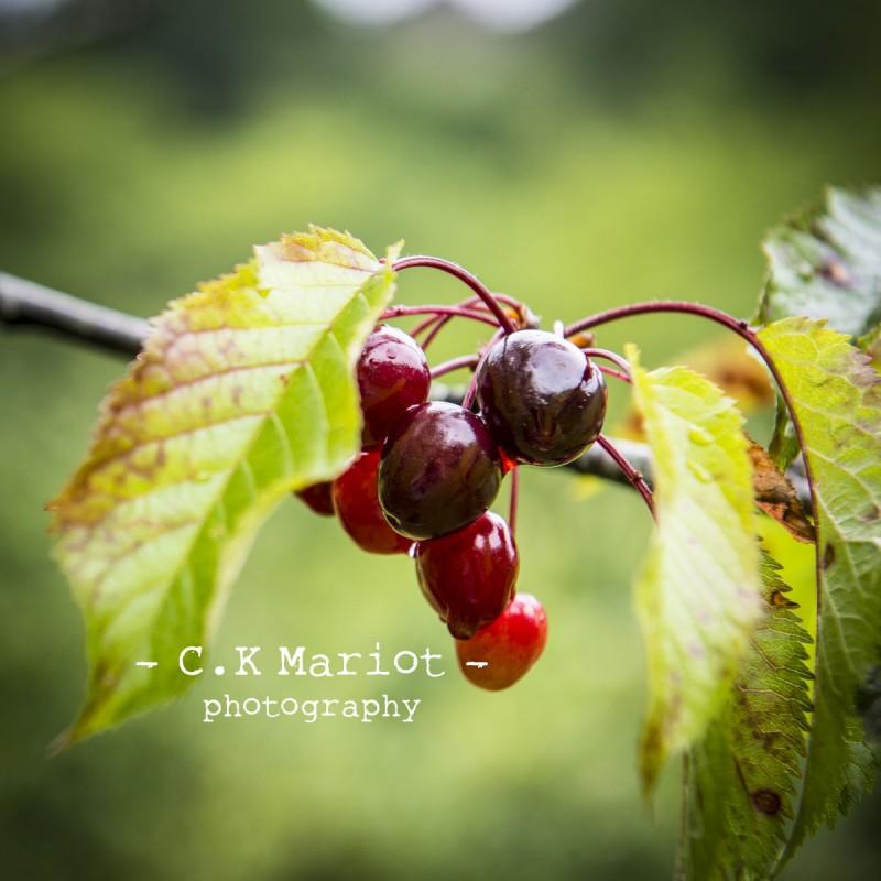 CK-Mariot-Photography-Itxassou-Fete de la cerise-0235