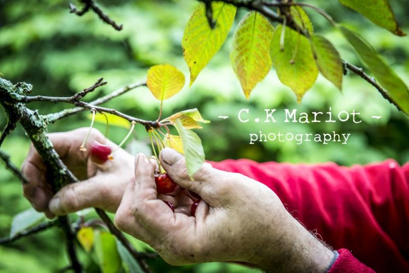 CK-Mariot-Photography-Itxassou-Fete de la cerise-0245