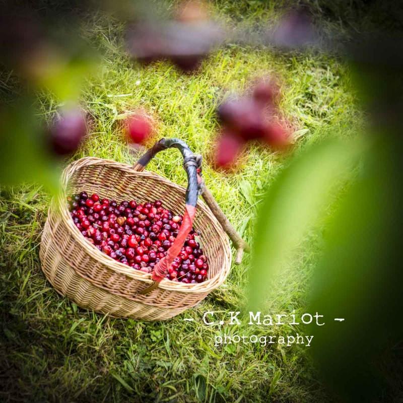 CK-Mariot-Photography-Itxassou-Fete de la cerise-0364